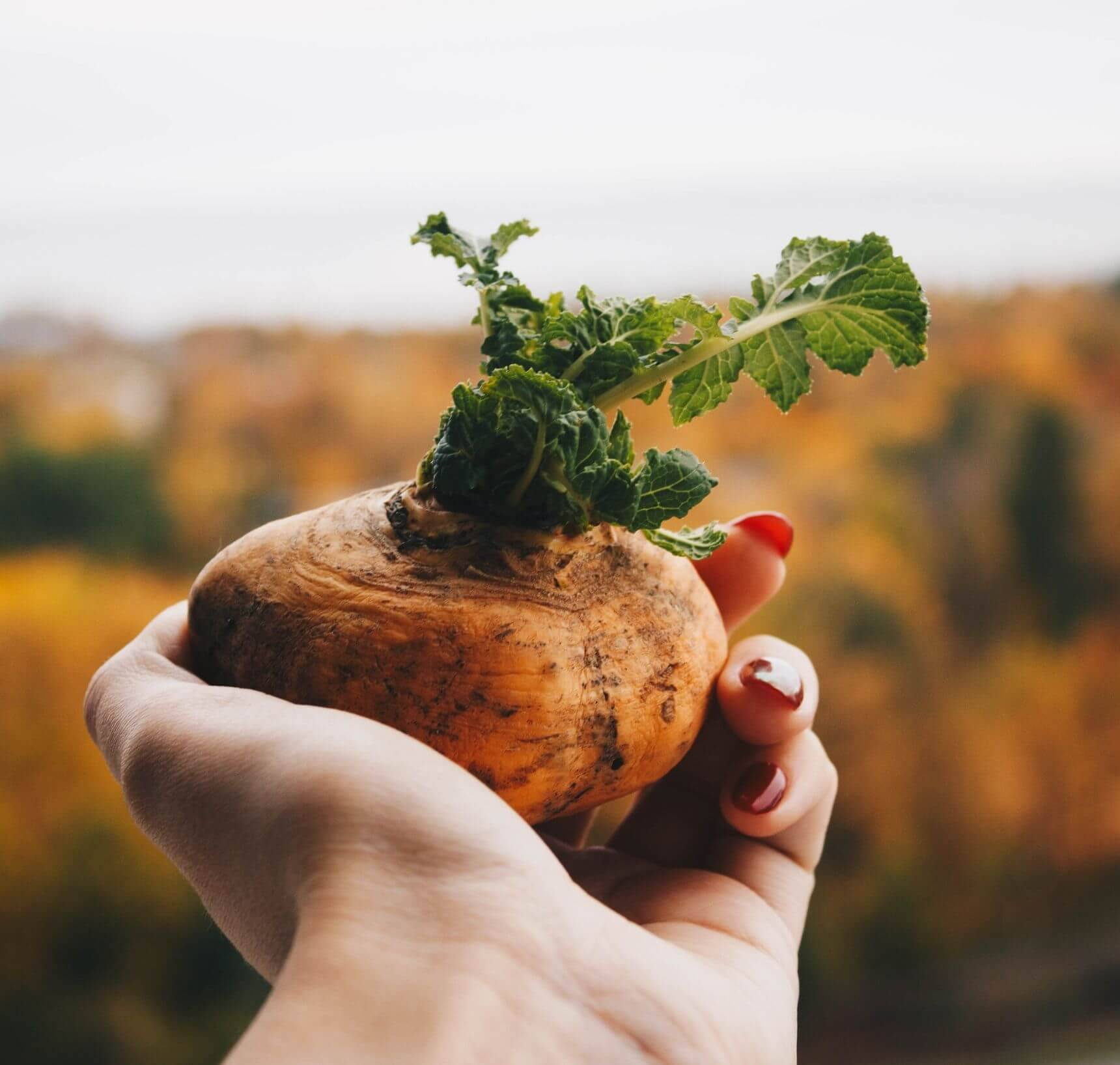 Aardappels gezond?