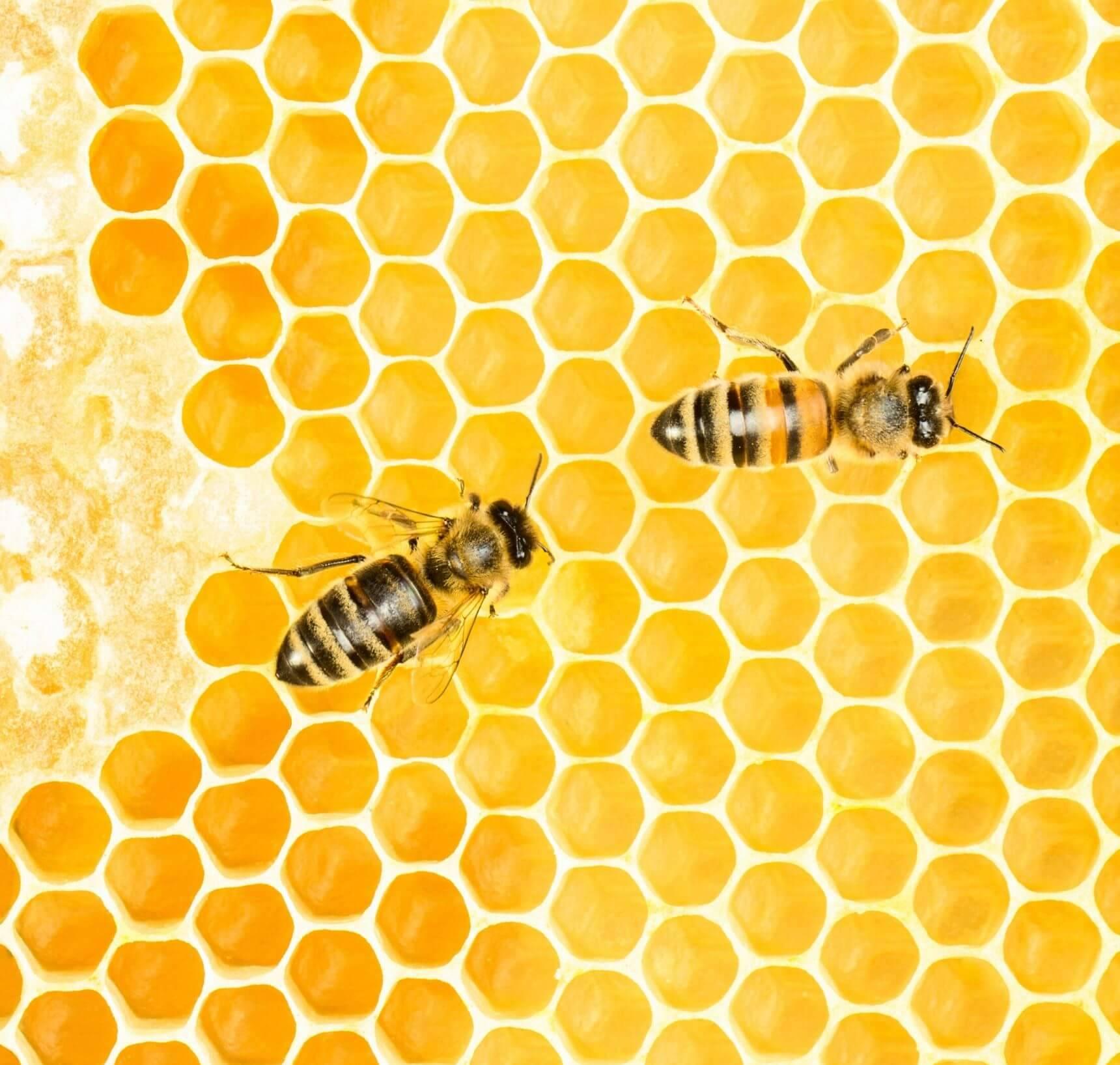 verbod bijengif